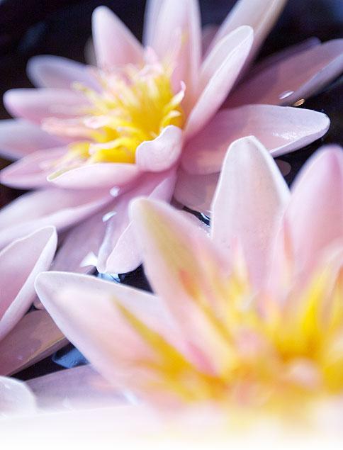 blomma_high